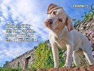 Přání K Svátku Podle Jmen | Zábavné obrázky a 5413895021497