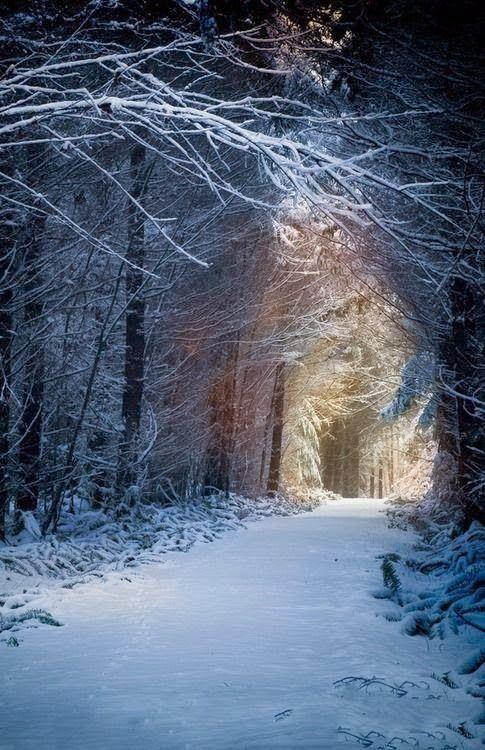 Winter Journey to Mist