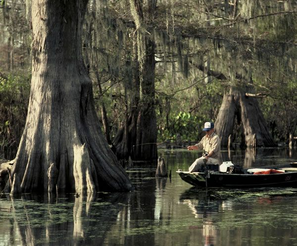 30 best freshwater fishing in florida images on pinterest for Florida freshwater fishing regulations
