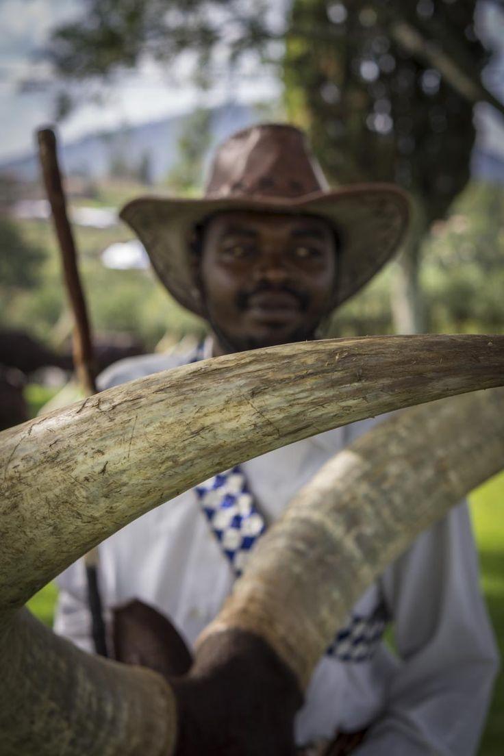 Close-up of horn of longhorn cow, Rwanda
