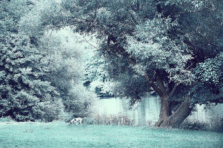 Dalmatian In Blue Woods by Jenny Rainbow