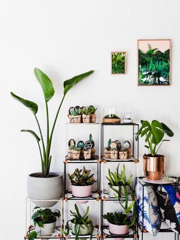 Ivy Muse · Botanical Emporium / via Design Files