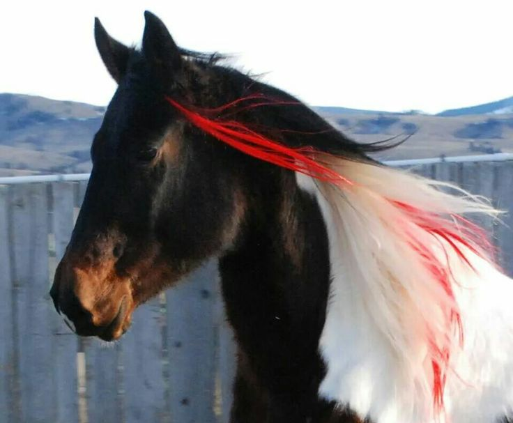 horse hair extensions