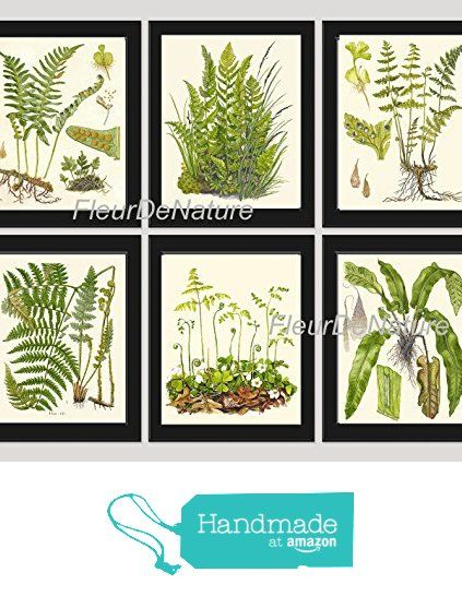 fern print set of 12 botanical art print lindman antique green ferns roots chart forest summer plant nature to frame home decor garden