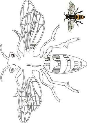Insects coloring page 3