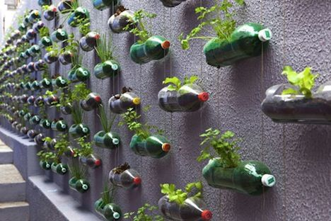 vertical garden, bottles