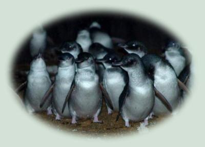 Penguin Tours at Low Head http://penguintours.lowhead.com/index.html