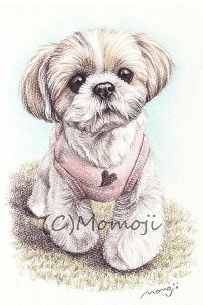 Best 25 Drawings Of Dogs Ideas On Pinterest Puppy