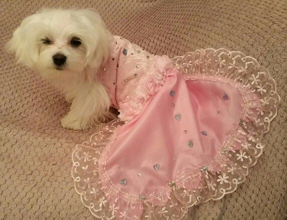 Party dress for sale in Pixies Posh Pets or email us at Pixiesposhpets@yahoo.co.uk
