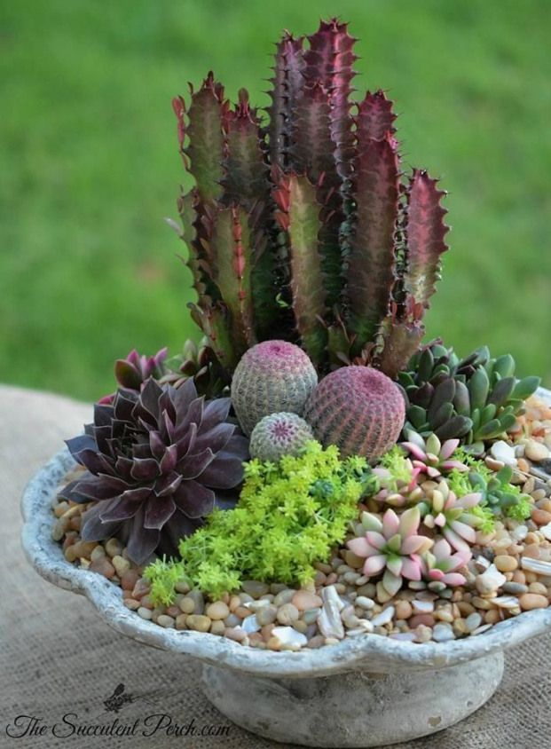 Succulent Container Garden Ideas Unique A Cornucopia With