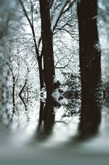 The Frozen Forest - Limited Edition 1 of 5
