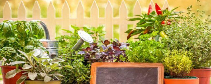 Como ter alfaces e outras hortaliças folhosas em mini espaços - Olá, pessoal. Hoje vamos falar sobre como cultivar hortaliças folhosas em pequenos espaços. Durante a elaboração do Calendário do Jardim do 'São Paulo Garden Club' 2015 (que será lançado em setembro), a nossa querida Suzanne Burt, levantou a questão de se era possível ou não mantermos hortaliças,... - http://www.ecoadubo.blog.br/ecoblog/2015/08/05/como-ter-alfaces-e-outras-hortalicas-folhosas-e