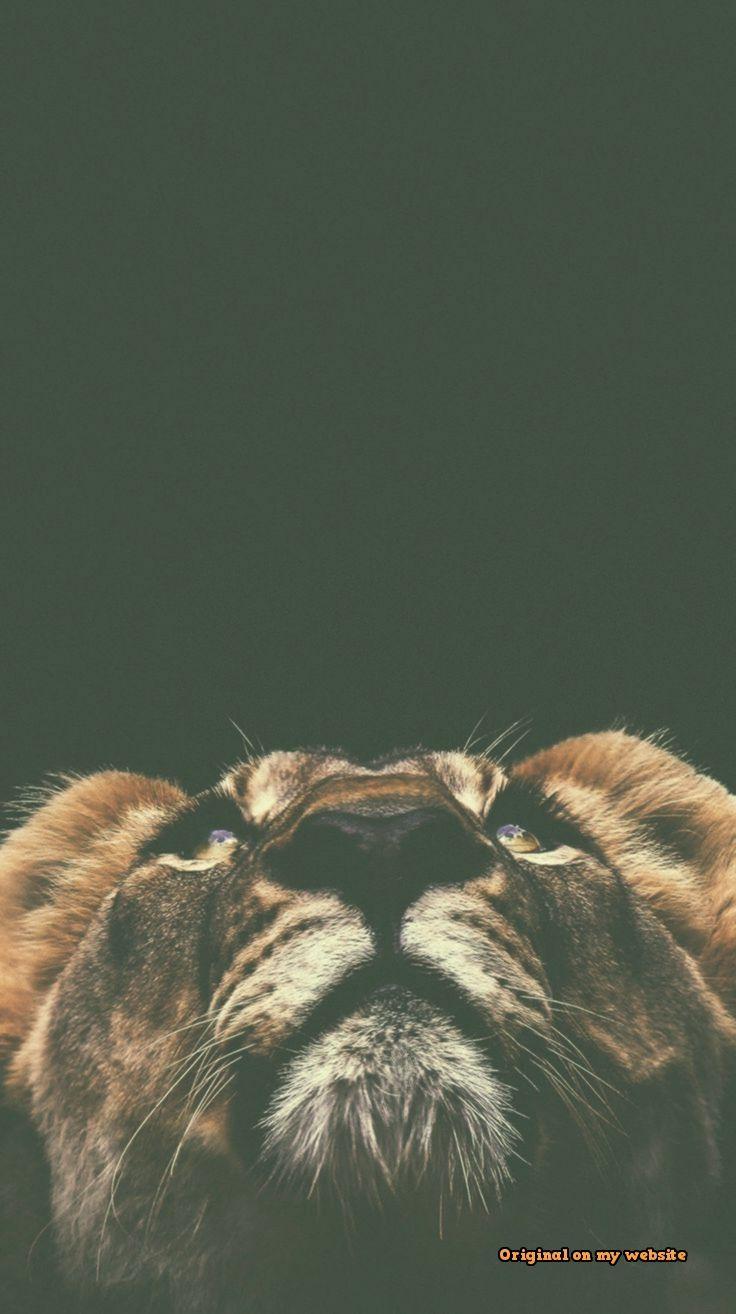 Iphone Wallpaper Animals 471 Fond Ecran Animaux Photos De Lion Photos Animaux Sauvages