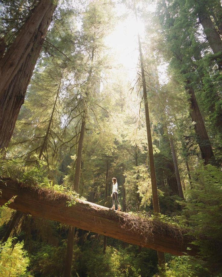 Wanderlog - photography blog and travel journal - Jedediah Smith Redwoods State Park