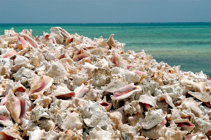 Conch Shells at Lac Beach, Bonaire. #Caribbean   See more of our favorites at www.sistersinthesand.com