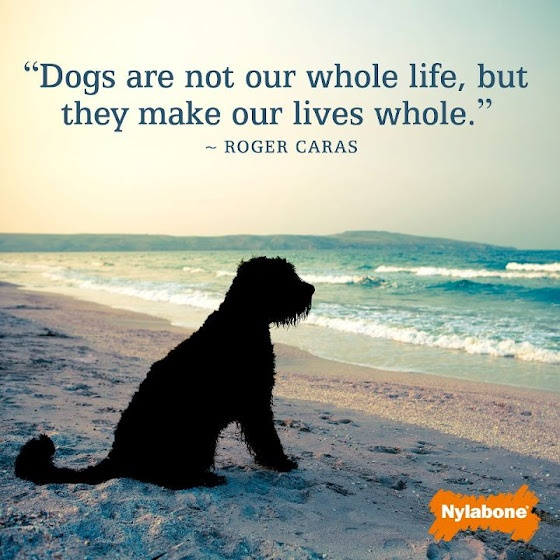 "Inspirational Pet Quotes: ""Dogs Are Not Our Whole Life, But They Make Our Lives"