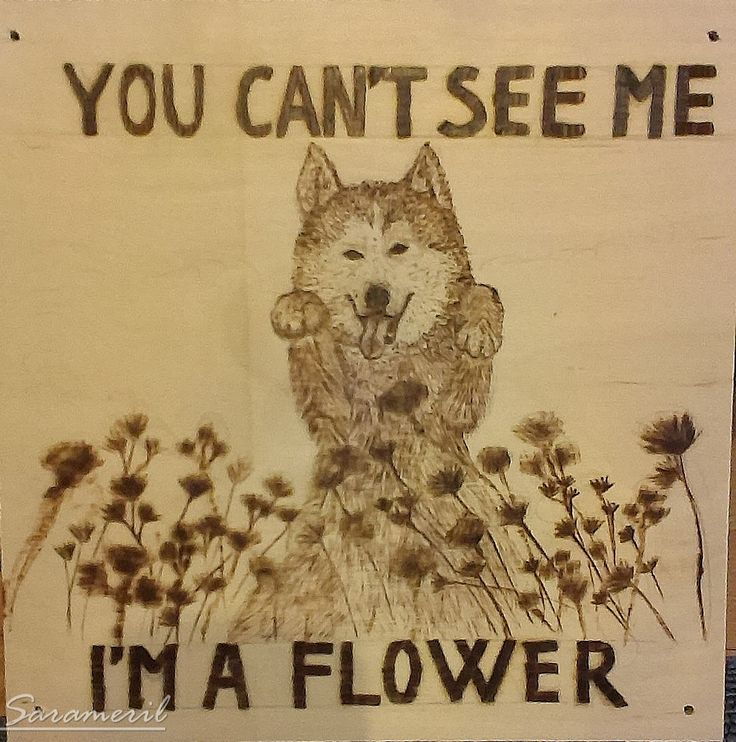"""You can't see me. I'm a flower."""