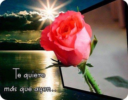 5 Imagenes De Flores Con Frases De Amor Encuentra Aqui Las Mejores