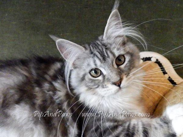 Pin On Kitty Kats