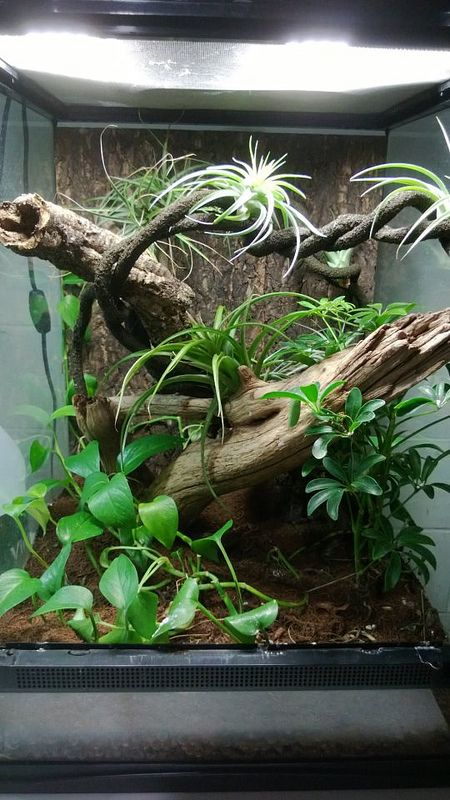 Our old Crested Gecko setup. They are now part of a larger breeding group in Iowa. -Seth I.