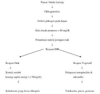 Pathway Hipoglikemia - Pathway Patofisiologi