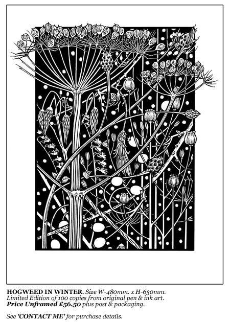 David Hall Artist, Historical Illustration, Natural History Illustration, Decorative Art, Art and Crafts, Exhibition Design, Alnwick Castle, English Heritage.