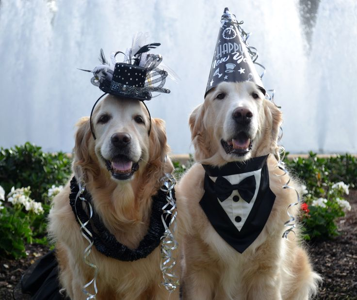 Happy New Year Golden Kisses From Brie And Bentley For 2017 My