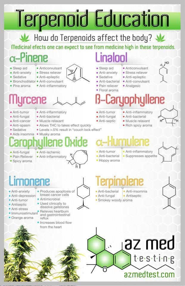 The Terpenes in Cannabis