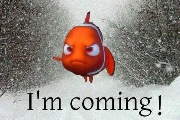 Have you found Nemo yet? Everyone stay safe in this blizzard!