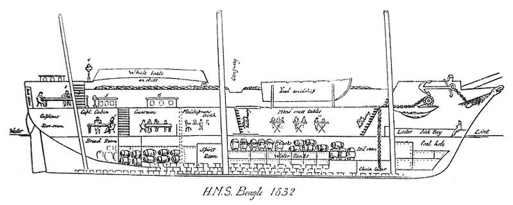 Cross-section of HMS Beagle, 1832
