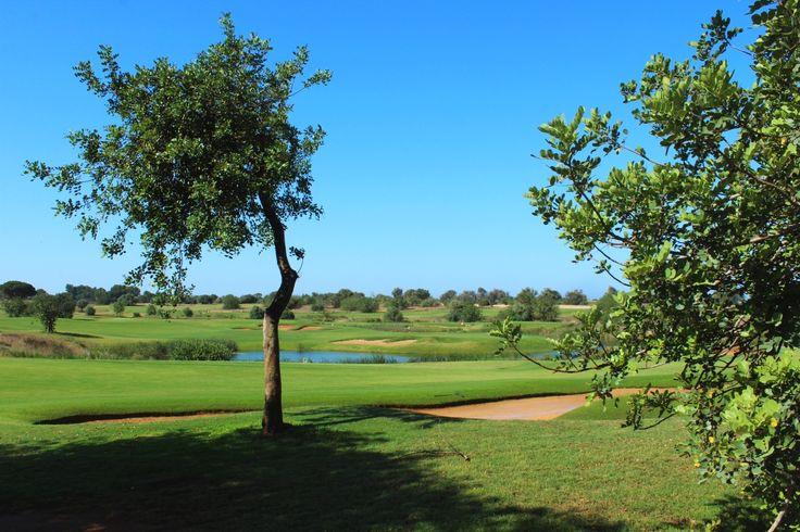 Splendida giornata per giocare a Golf ...