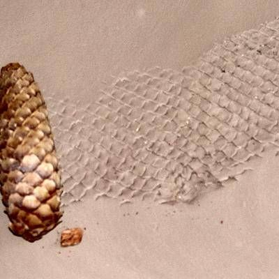 Using a pine cone for texturing. Could do on the inside walls of a cob house.looks like a snake skin texture.