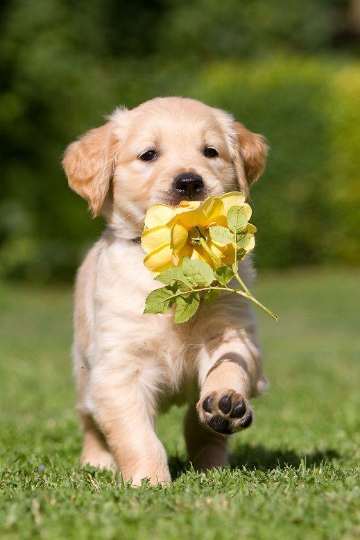 Same słodkości.  http://www.fototapeta24.pl/  #fototapeta #fototapeta24pl #pieseł #pies #dog #sweet