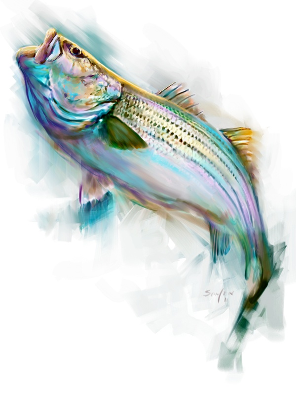 Striped Bass Fish Limited Original Art -