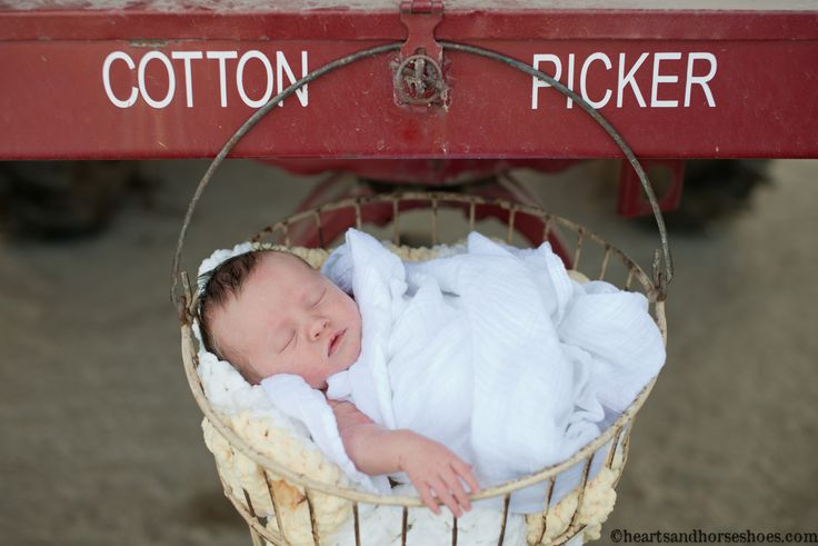 Family Photography.  Newborn photography. Newborns on the farm.  www.heartsandhorseshoes.com