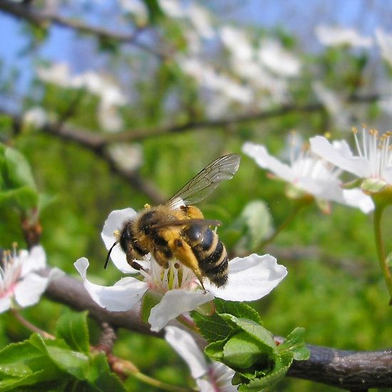 Bee on flower on tree branch