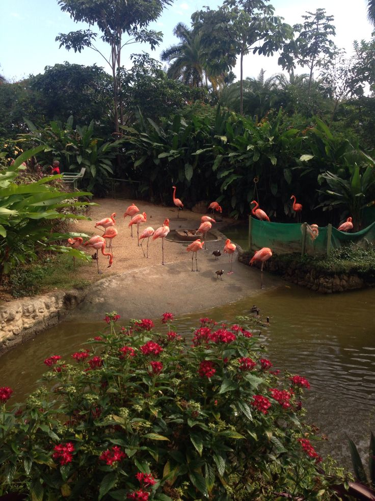 Flamingos at Trinidad and Tobago Emperor Valley Zoo