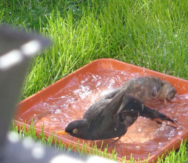 Bagno in piscina! -  Foto-diario di una giardiniera curiosa