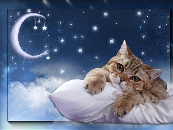 Image result for fantasy goodnight dreamies.de images
