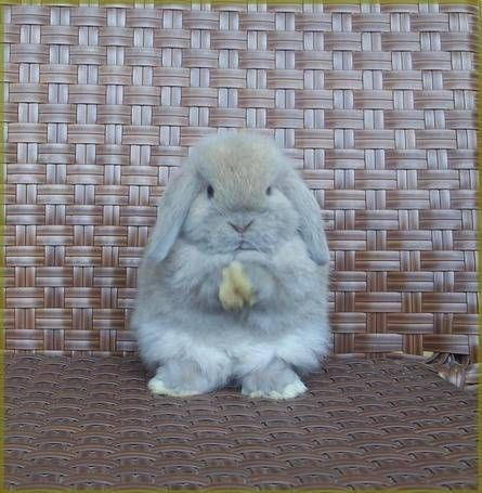 Rabbit lol either he is praying or about to tell me something serious