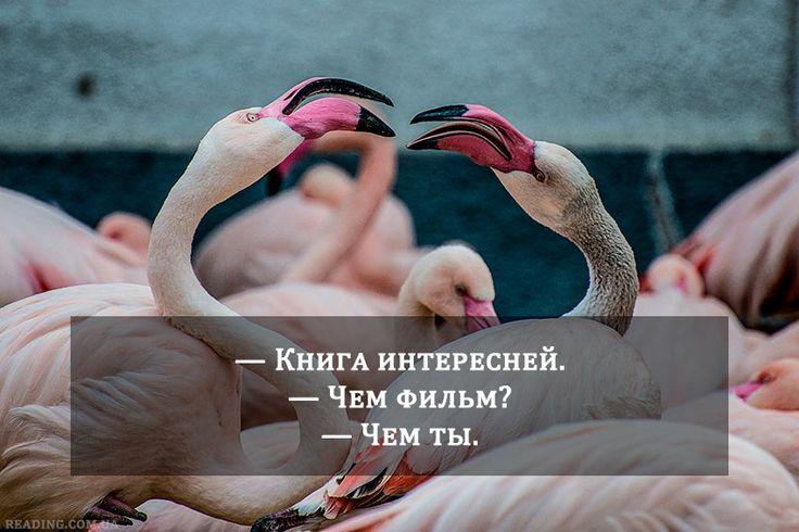 #книги #картинки #книголюб #readingcomua #юмор #смешно #смех #интересное #птицы #животные #фламинго #умора