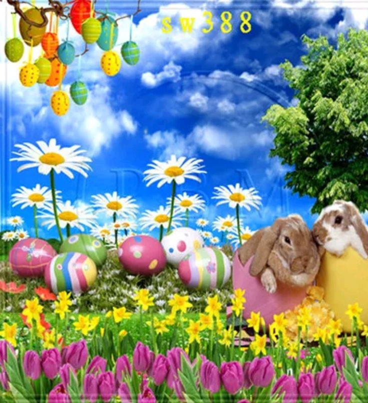 Spring Easter Day Photo  Background