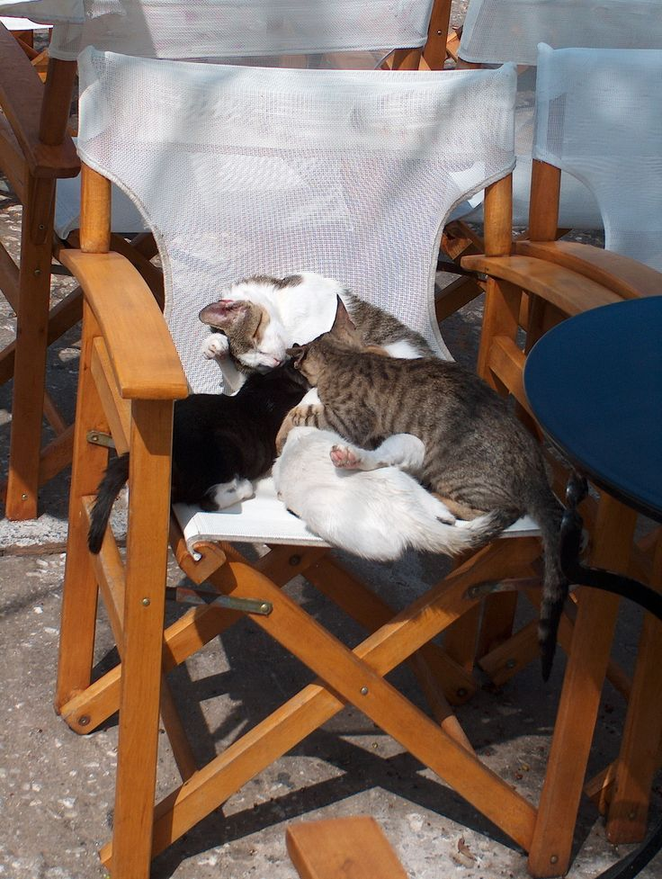 4 cats and 1 chair