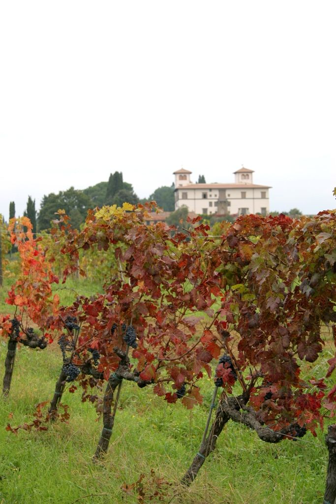 At the 'Le Corti' Estate, there are about fifty hectares of vineyards with a mainly southern exposure on sloping grounds that descend towards the Terzona torrent, an affluent of the Pesa River. It is a succession of parallel hills that tend to fan out and form a semicircle in such a way that two of them are known as the old and the new Parliament.