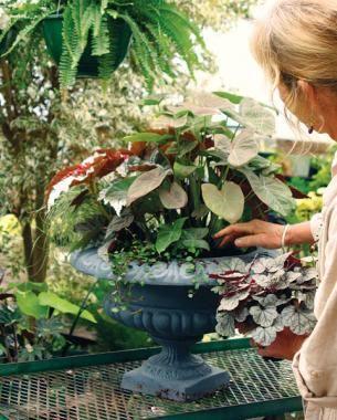 Designing Great Containers | Fine Gardening Magazine