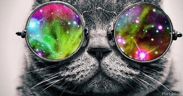 Fotos De Gatos Para La Portada De Facebook Portada Para Facebook De Gatos Graciosos Con Lentes Imagen Graciosa De Gat Animals And Pets Heart Sunglass Image