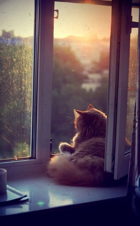 I'd like to be here! #cat  #window