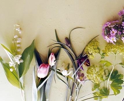 34 besten schachbrettblumen fritillaria meleagris bilder. Black Bedroom Furniture Sets. Home Design Ideas