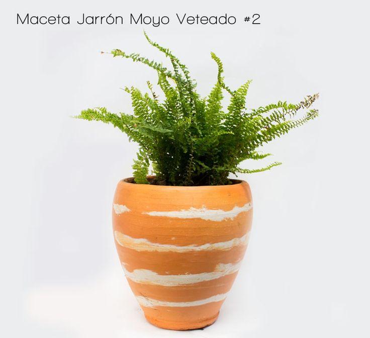Planta Helecho Común | Venta de Plantas y Semillas | Tienda Online