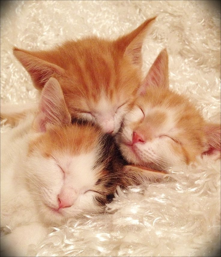 Cute kittens! I love my 3 kittens! Taylor, Parker and Ryker.